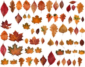 Ready for Fall? How aboutE-books?